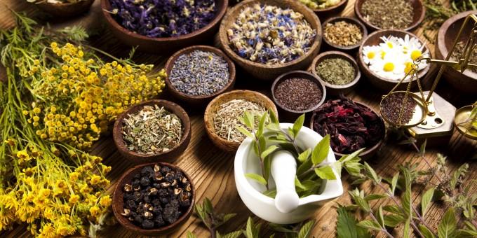 Resultado de imagen de medical herbs
